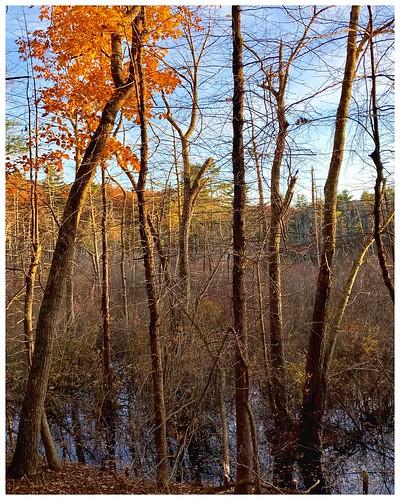 landscape forest newengland massachusetts haroldparkerstateforest snapseed iphone rlonpine