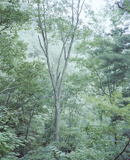 Tree in Appalachia, Tennessee