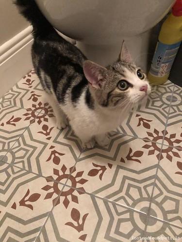 Thu, Dec 6th, 2018 Found Male Cat - Barrington Court, Prosperous, Kildare