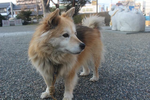 wakeikazuchi-gosyuin038