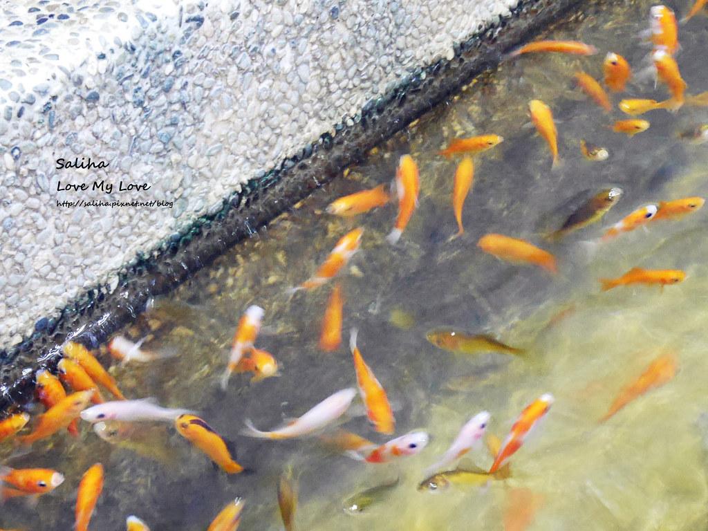 宜蘭礁溪一日遊景點推薦礁溪湯圍溝重口味溫泉魚去角質 (22)