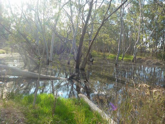Nhill Lake