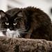 008 - cats cats cats- A9506330
