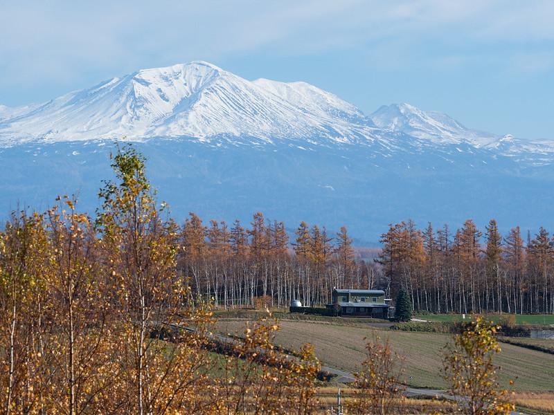 美瑛の畑と山