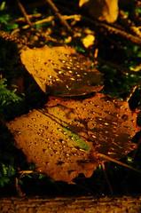 funkelnder Herbst