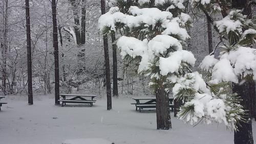 christmas snow winterlandscape winterscene