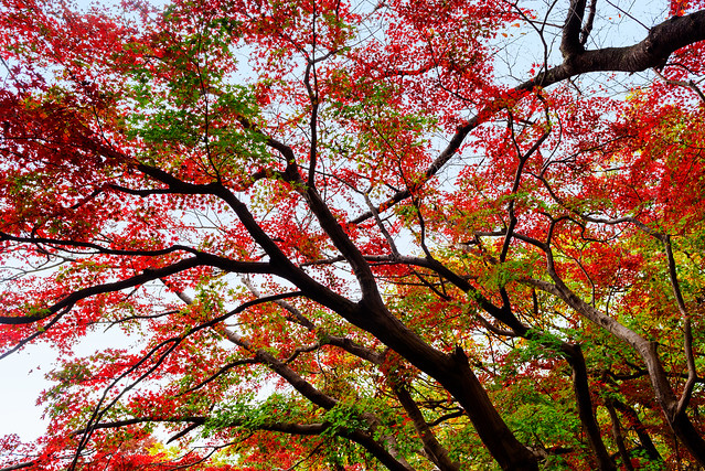 Autumn Leaves in Todoroki, Nikon D750, AF-S Nikkor 28mm f/1.8G