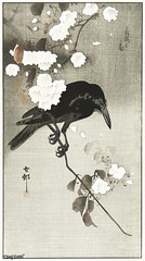 Crow with cherry blossom (1900 - 1930) by Ohara Koson (1877-1945). Original from The Rijksmuseum. Digitally enhanced by rawpixel.