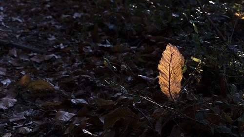 Quando una foglia d'autunno diventa una lampada gialla...