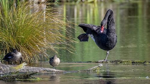 Black Swan calisthenics