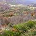 Hayedos del Monte Colina.
