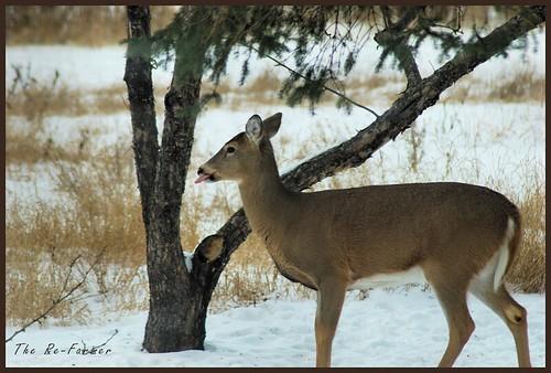 2018-12.deer.solo.1