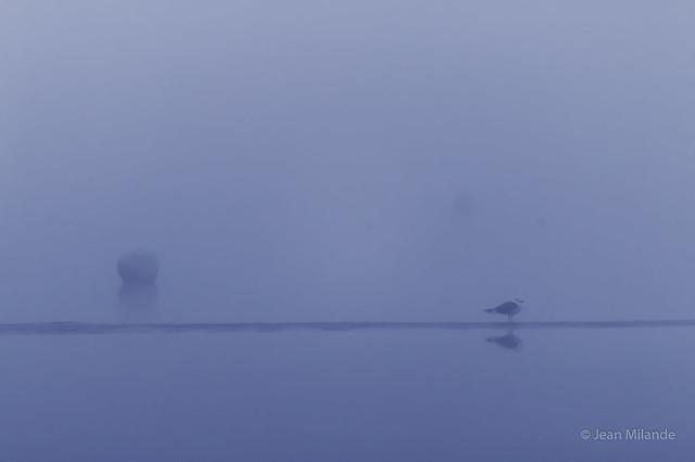 par brouillard, Canon EOS 70D, Canon EF 70-200mm f/4L