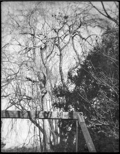swing swingset trees neighborhood asheville northcarolina lookingup ferrania tanit ferraniatanit rerapan400 127 127film halfframe landscape blackandwhite monochrome monochromatic