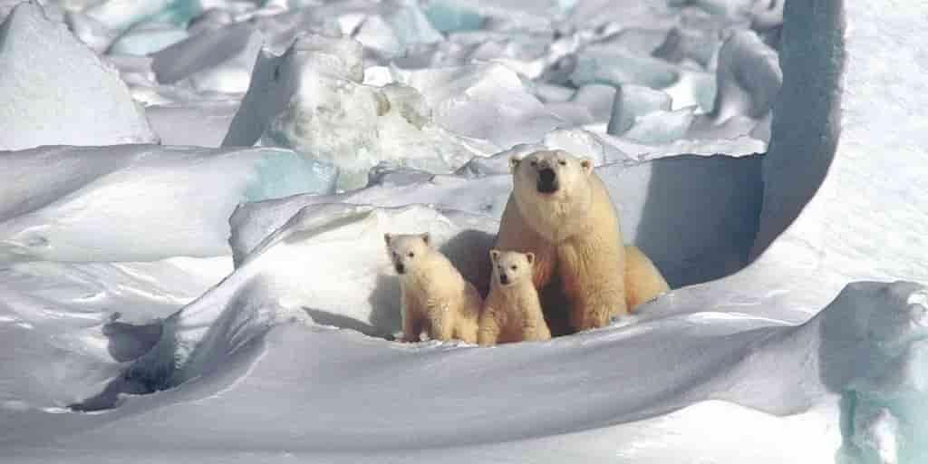L'Arctique enregistre sa deuxième année la plus chaude jamais vue