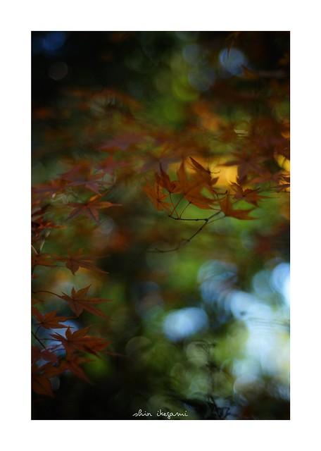 2018/12/24 - 1/24 photo by shin ikegami. - SONY ILCE‑7M2 / Carl Zeiss C Sonnar T* 1.5/50 ZM