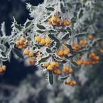 Winter Fruit Bokeh - 21. Januar 2019 - Schleswig-Holstein - Deutschland