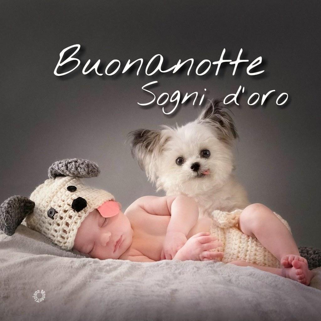 Link Buonanotte Sogni Doro Children Puppies Page Facebook