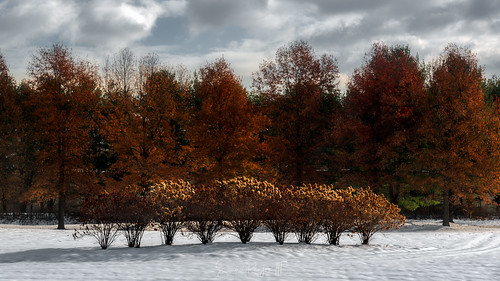 connecticutphotographer d750 landscapephotographer massachusetts naturephotographer newengland nikon northeast november snow southdeerfield trees usa winter cloudy digital sideoftheroad unitedstates us