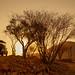 Namibia Sundowner Safari