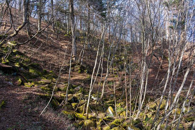 苔むした岩の道