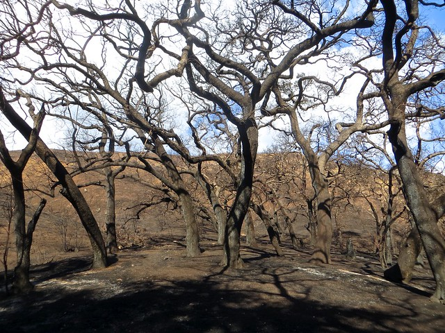 solstice canyon after the fire