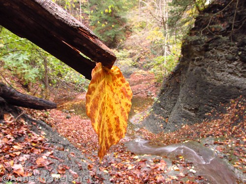 A leaf part way up the First Falls in Barnes Creek Gully, Onanda Park, Canandaigua, New York