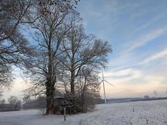 31. Januar 2019 - 10:08 - Winterspaziergang in Roxel am 31. Januar 2019.