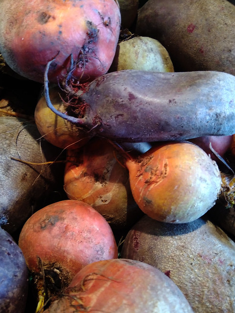 Red & Yellow Beets | Beta vulgaris | Five ways to make people at the farmers' market hate you | Hedgefairy Tales https://hedgefairy.wordpress.com