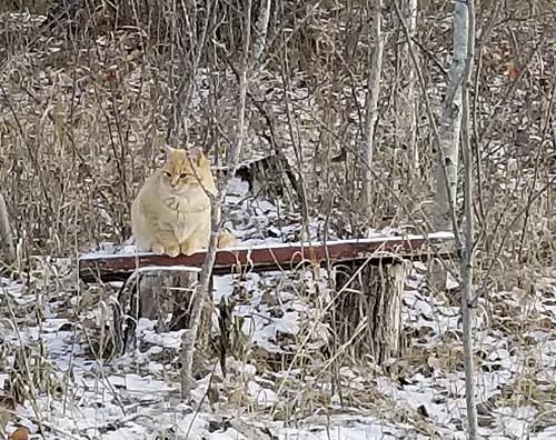 20181108.morningcats9
