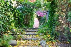 Secret Path In The Gardens