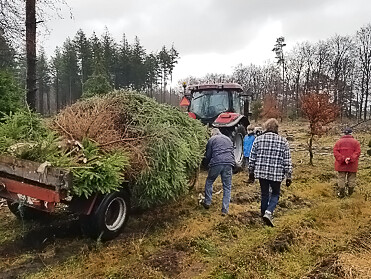 kerstboom-op-transport