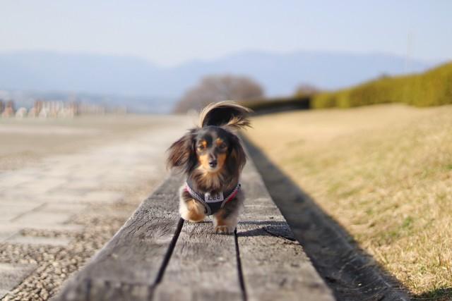 きちんとお手入れして旅行を楽しむ犬
