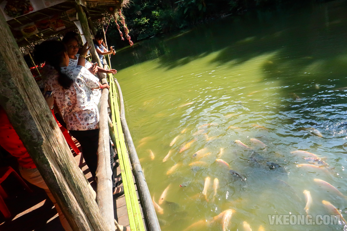 Veg-Fish-Farm-Thai-Restaurant-Fish-Feeding