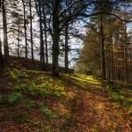 Morralee Wood