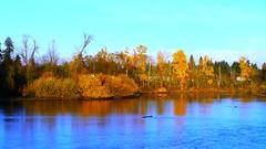 Fall leaves along the Willamette River in Eugene, Oregon