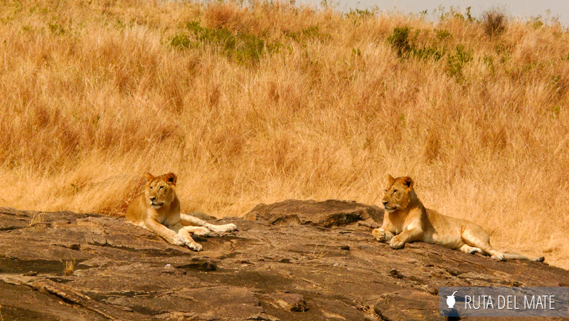 Animales hacer un safari P1100812