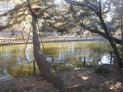 Shakujii Kouen - Shakujii Park