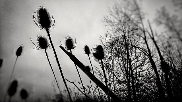 November 30 — Chilled