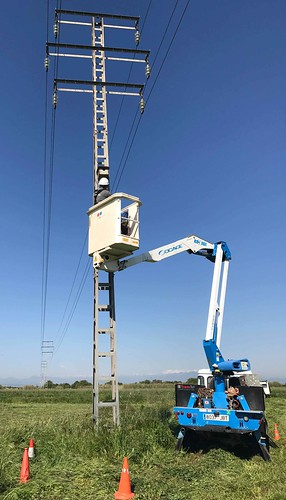 COMSA Industrial participates in a conservation and reproduction project for the European Roller in Empordà (Girona)