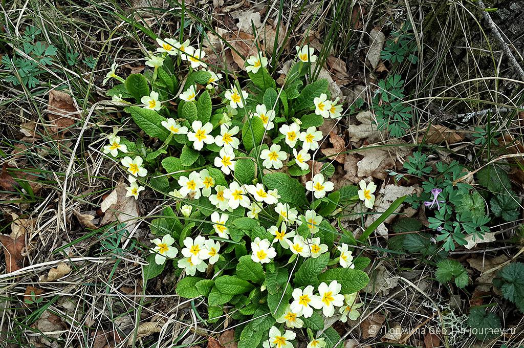 цветы в апреле в Крыму