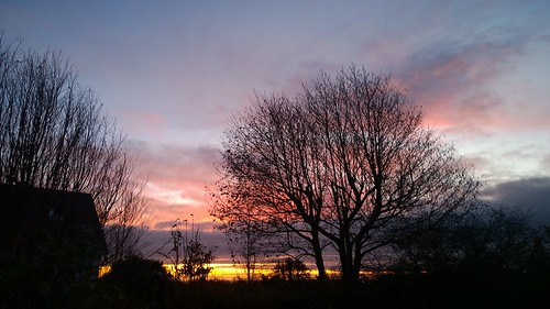 winter dawn sunrise colour tree morning ireland sky cloud cameraphone lumia1020