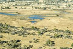 DSC4676 Vuelo en avioneta sobre el Delta del Okavango yendo hacia Kasane, Botsuana