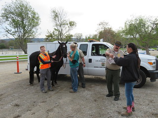 Equine Micro-chipping Clinic 12/09/2018
