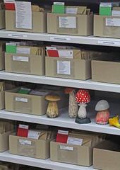 Last arrangement of boxes, specimens and labels