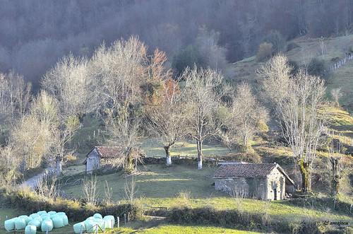 Bosque de Peloño (Asturias)  Spain