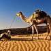 Pause (Adrar, Mauritanie)