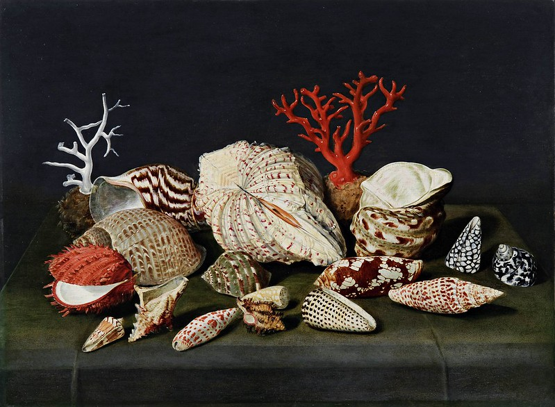 Jacques Linard - Still life with shells and coral