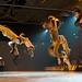Foto Nederlandse Dansdagen 2013