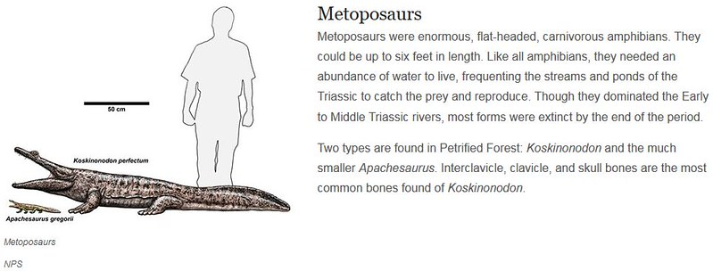 Metoposaurs (from NPS)
